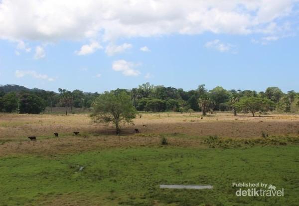 Tempat ini merupakan unit pengelolaan Banteng Sadengan, populasi banteng yang terus menurun menjadi dasar dibuatnya feeding ground ini.