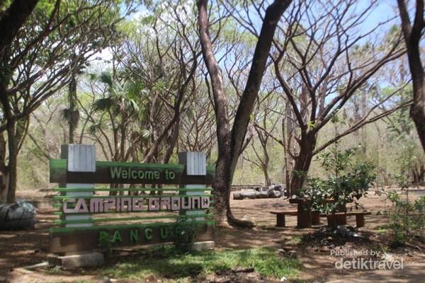Di Taman Nasional Alas Purwo juga terdapat camping ground dengan monyet liar yang dapat kita jumpai dengan mudah.