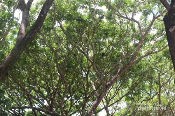 Seekor monyet nampak di pohon yang ada di sekitar area camping ground.
