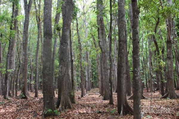 Taman Nasional Alas Purwo dengan luas 43.420 hektar terbagi menjadi beberapa zona yaitu zona inti, zona rimba, zona pemanfaatan dan zona penyangga.