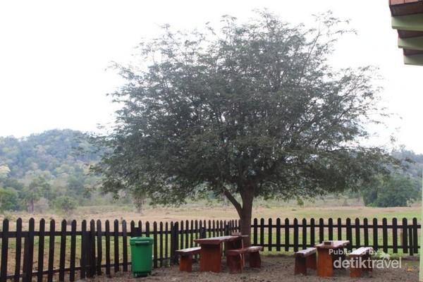 Salah satu tempat paling dikunjungi di Taman Nasional Alas Purwo adalah Sabana Sadengan.