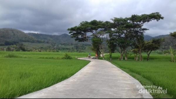 Track sepeda di tengah sawah dan bukit
