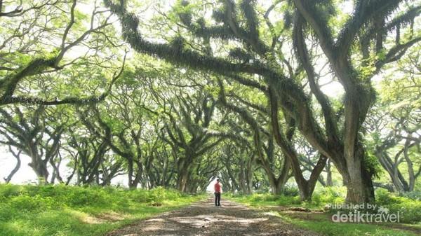 Hutan negeri impian De Djawatan yang sungguh indah.
