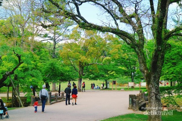Jangan lupa berjalan santai bersama keluarga di sepanjang jalan Nara Park yang asri