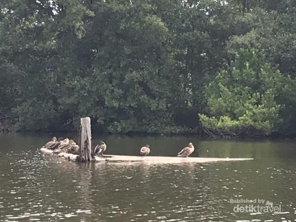 Tampak Burung-burung yang ada di sekitar danau
