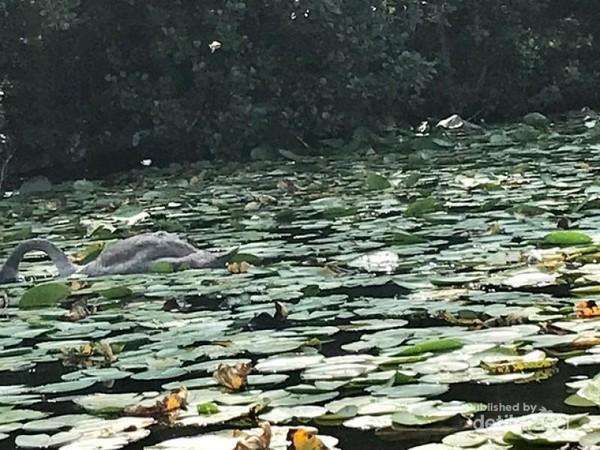 Beragam jenis tanaman teratai tumbuh di danau ini