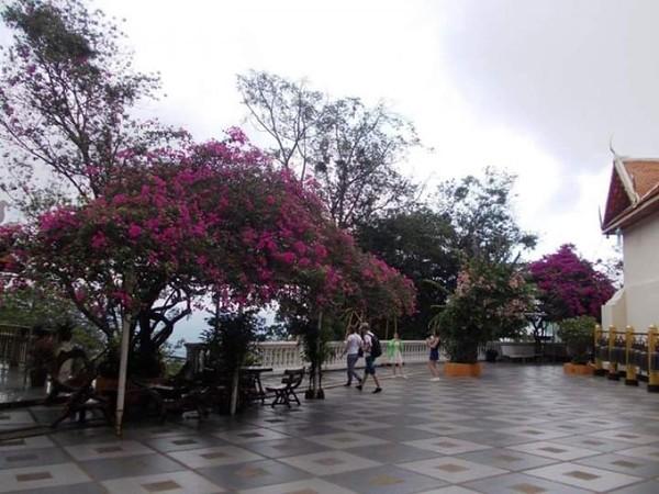 Palataran dan taman kawasan taman utama Doi Suthep di dataran paling tinggi.