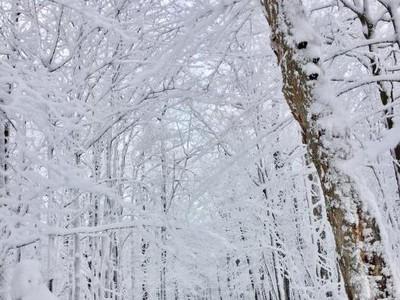 Foto: Saat Musim Salju di Kanada