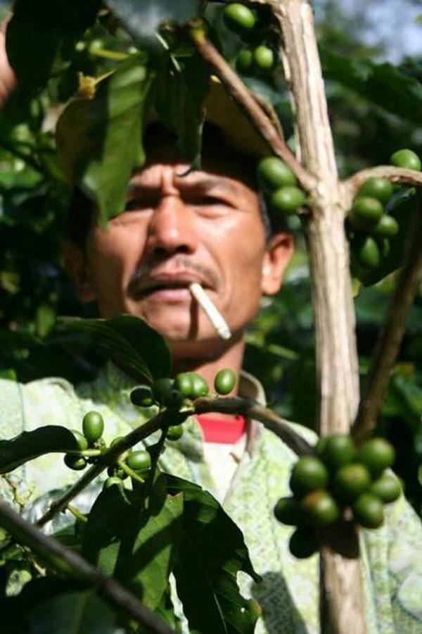 Kopi dan petani kopi