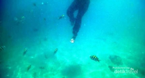 Gili Nangu, Sekotong Lombok Barat. Begitu kaki masuk air langsung diserbu ikan-ikan