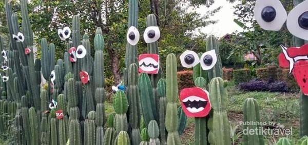 Lucu-lucunya kaktus yang diberi mata dan mulut.