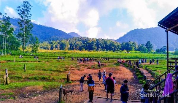 Ini adalah kandang rusa di Kampung Cai Ranca Upas