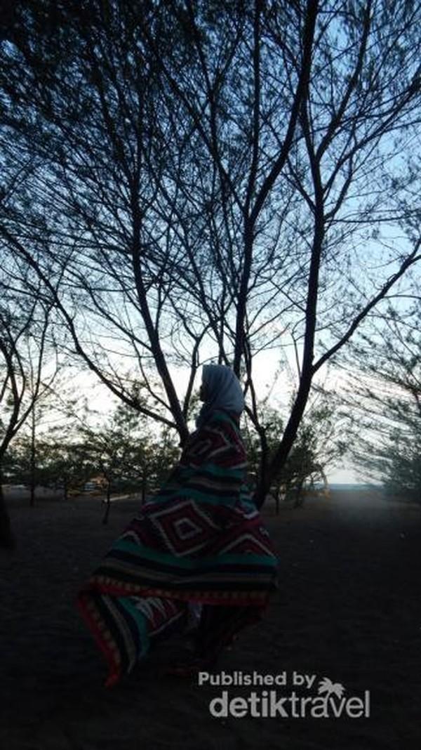 Pemandangan pohon cemara dari dekat.