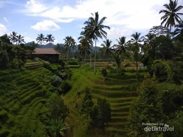 Hiaunya persawahan di sekitar Secret Garden Village