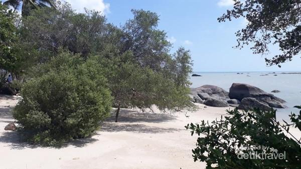 Pepohonan khas tepi pantai Pulau Belitung, pasir pantai yang putih, dan laut yang biru adalah pemandangan yang bisa kita nikmati di sini