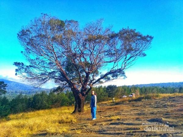 Disekitar kawah juga terdapat pohon-pohon cantik yang instagrammable