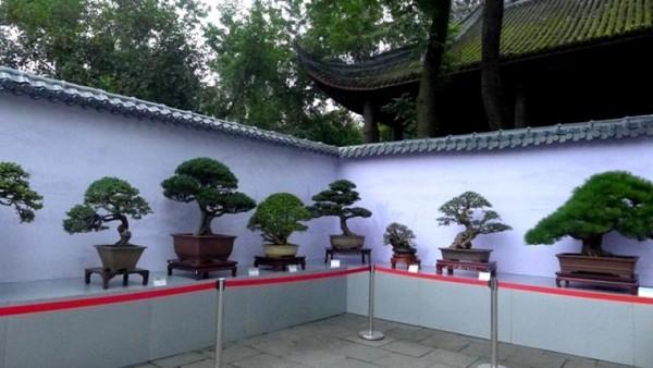 Terdapat satu spot dimana terdapat pohon-pohon bonsai yang menarik