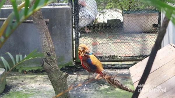 Tidak ketinggalan aneka burung yang cantik dan menarik siap menemani pengunjung di Dairyland.