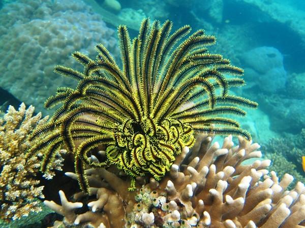 Lili laut