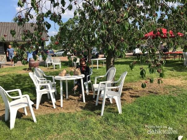 Duduk santai di bawah pohon kersen sambil menghirup segarnya udara.