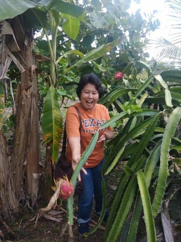 Berfoto di Kebun yang ditanami buah naga