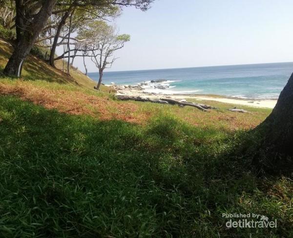 Sekitar pantai terdapat pepohonan yang asri.