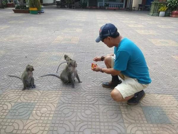 Kera-kera kecil menunggu makanan yang diberikan pengunjung.
