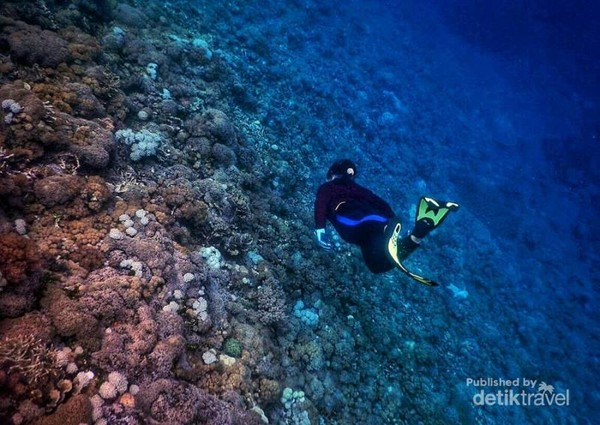 Hamparan terumbu karang Pantai Sulamadaha indah sekali