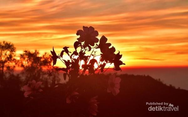 Bromo telah diakui sebagai salah satu tempat menyaksikan sunrise terindah di dunia. Ada 4 destinasi menarik untuk menyaksikan sunrise di Bromo, diantaranya Widodaren, Kawah Bromo, Pasir Berbisik, dan Bukit Teletubbies.