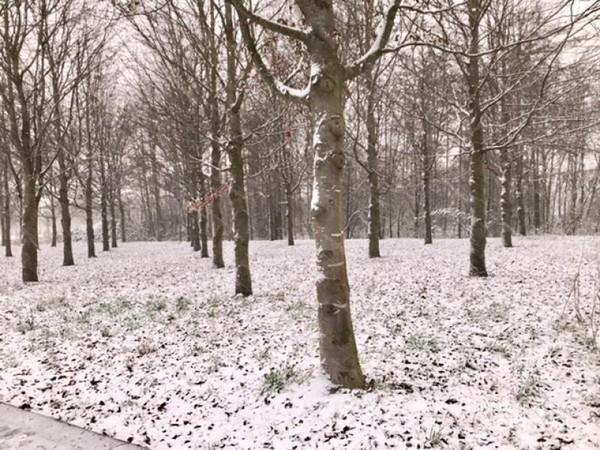 Tetap cantik meski pepohonan tanpa daun di musim dingin