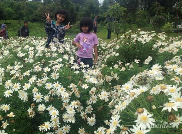 Berfoto di taman bunga