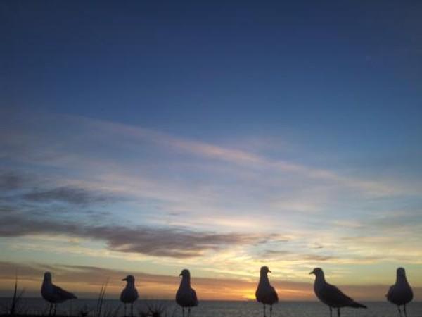 Burung camar ikut menikmati sunset