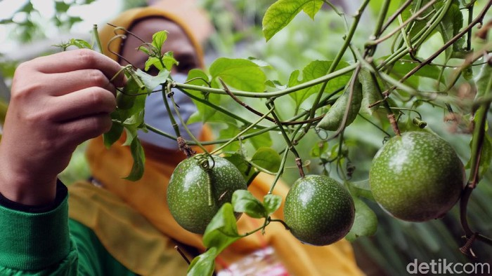 Dalam rangka HUT Kota Bekasi meluncurkan 'Ketahanan Pangan'  salah satunya di RW 20 Jatimakmur Pondok Gede. Program ini dinilai untuk kesiapan pangan dan peduli lingkungan.