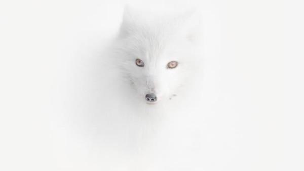 Ada hampir 25.000 foto yang dikirimkan ke kompetisi tahunanTravel Photographer of the Year (TPOTY) 2020.Untuk pertama kalinya, seorang fotografer Rusia mengklaim posisi teratas. Adalah Vladimir Alekseev yang meraih gelar juara umum Travel Photographer of the Year 2020 dengan foto rubah diselimuti badai salju.