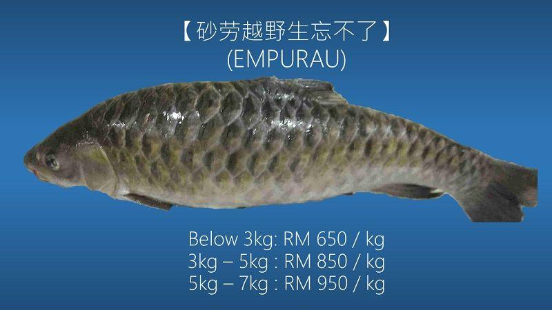 Wow! Harga Ikan Langka Ini Setara dengan iPhone 12 Pro Max!