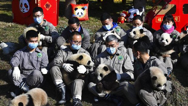 Bayi panda duduk di dekat hiasan bernuansa tahun baru Imlek di China Conservation and Research Center for the Giant Panda di Cagar Alam Wolong di provinsi Sichuan di China barat daya, (Chinatopix via AP)