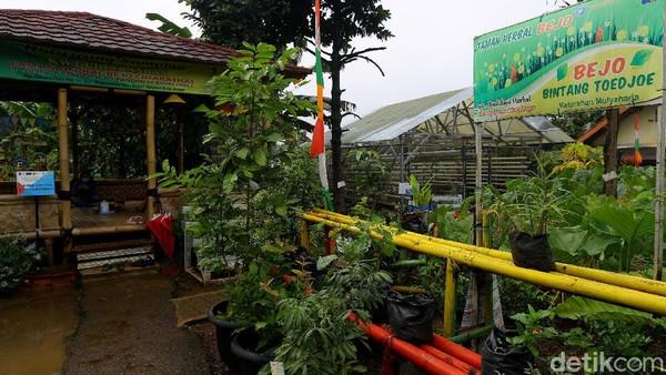 Komunitas Wanita Tani di kampung ini juga dengan getol menanam Jahe Merah di kawasan Apotik Hidup ini. Tak heran bila saung ini juga disponsori oleh salah satu produsen minuman herbal Bejo.