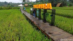Ini Wisata Alam Baru di Bogor, Kampung Tematik Mulyaharja