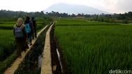 Mudik Dilarang, Lepas Rindu Kampung Bisa di Desa Wisata Bogor