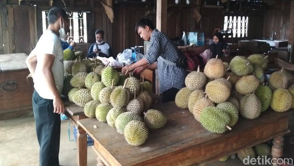 Pihak wisata menjamin harga durian lebih murah dibandingkan tempat lain, yaitu Rp 80 ribu per kilogram untuk jenis montong. Sedangkan yang lokal mulai dari Rp 50 ribu. (Sudirman Wamad/detikcom)