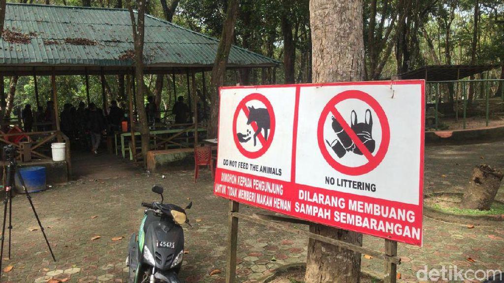 Satu Orang Tewas, Begini Kronologi 2 Harimau Sinka Zoo Lepas dari Kandang