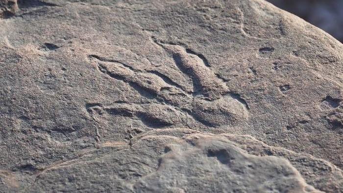 Seorang bocah 4 tahun menemukan jejak kaki dinosaurus. Jejak tersebut kemudian disimpan dan dipajang di museum.