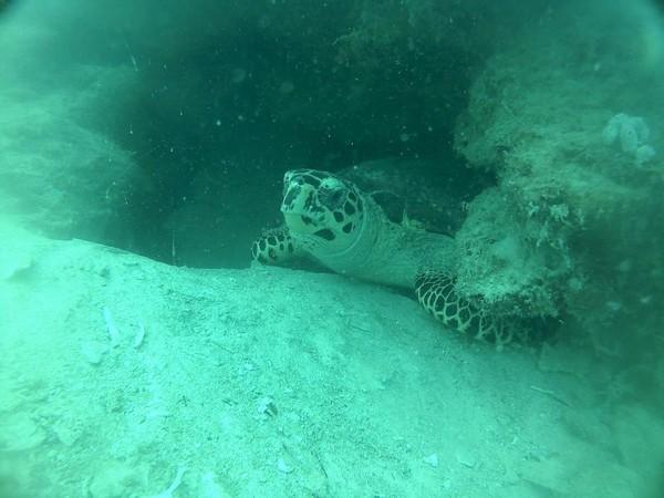 Hello Sea Turtle!