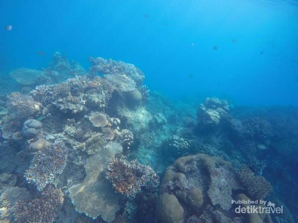 Ke Karimun Jawa sudah pasti ada agenda snorkeling. Pemandangan bawah lautnya sangat cantik.