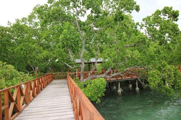 Jalur menuju bagian kiri Pantai Wisata Bakau Kormun