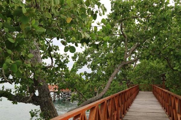 Sisi menuju bagian ujung Pantai Wisata Bakau Kormun
