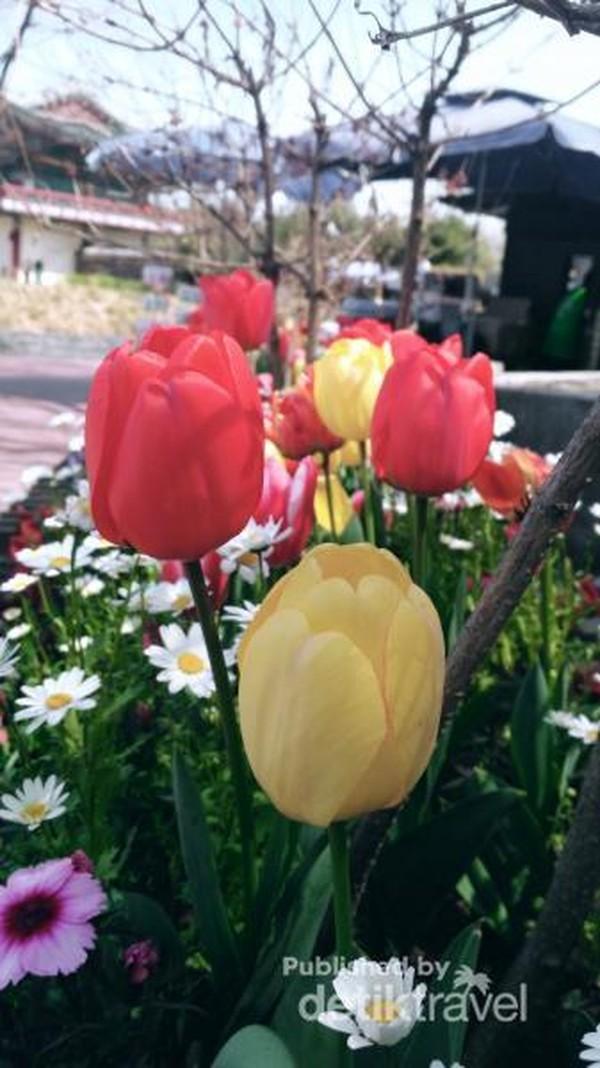 Di depan pintu masuk kita akan di sambut dengan bunga bunga cantik yang berhamburan di sekitar taman.