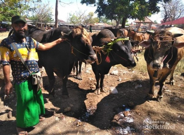 Salah satu jenis sapi yang diperdagangkan di Pasar Keppo Madura