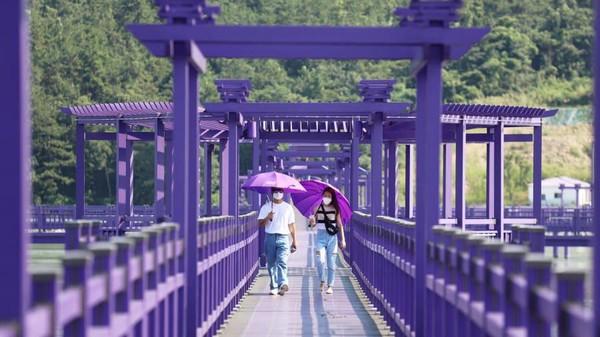 Ada spot instagramable berupa jembatan besar yang menghubungkan Pulau Banwol dan Pulau Parkji. (Shinan County Office)