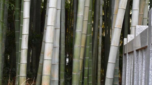 Adalah hutan Yawata no Yabushirazu yang terletak di Prefektur Chiba.Legendanya, hutan yang satu ini dipercaya begitu terlarang. Disebutkan, barang siapa yang menginjakkan kaki di sini akan hilang (istimewa)